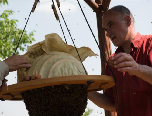 2019 「蜜蜂的奧秘」工作坊