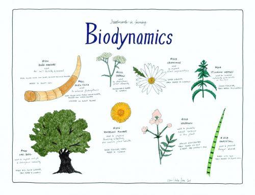 生機互動農法介紹 : 有機農業再進化(深層進化的有機農業)